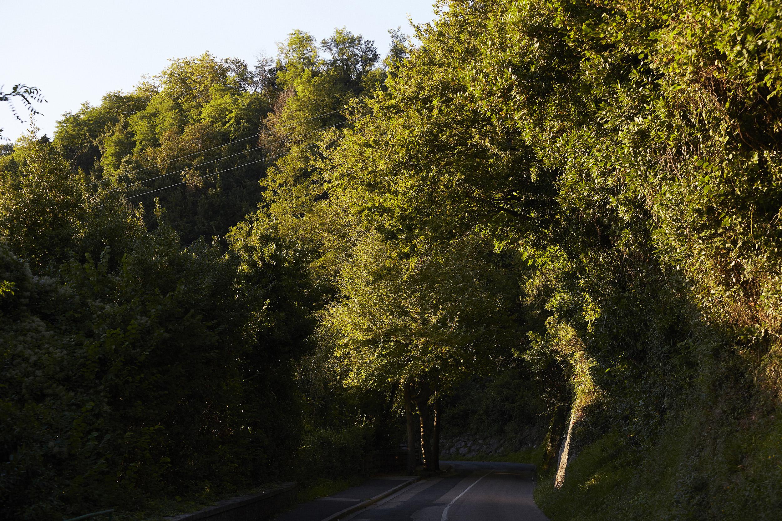 MENDI ARGIA – bosque